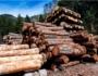 Why Buy Bulk Firewood For Sale?